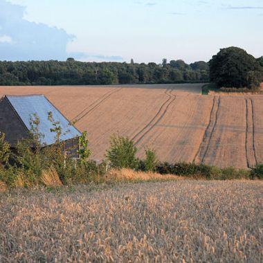 Farmland_at_Westley_Bottom_-_geograph.org.uk_-_923638